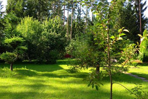 Загородный особняк в окружении многовекового леса - Фото 5