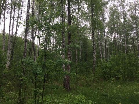 Участок, 12,5 соток с лесом, ИЖС, д. Панино Чеховский район - Фото 5