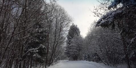 Продается земельный участок 6 соток Роговское пос, с. Каменка, СНТ Кв - Фото 5