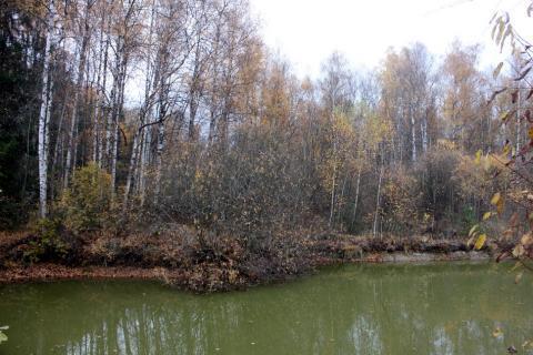 Прилесной участок в СНТ, окруженном с четырех сторон грибным лесом - Фото 3