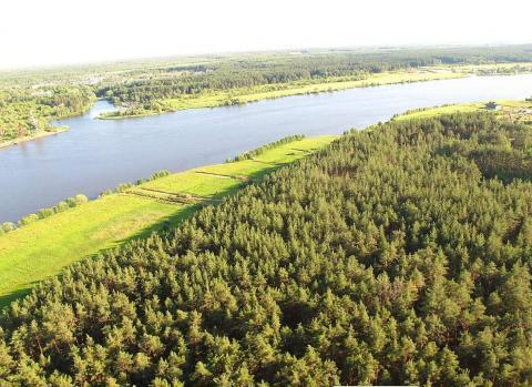 Участок рядом р.Волга и сосновым бором - Фото 3