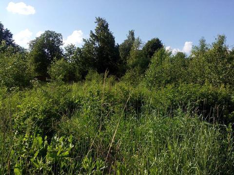 Участок на 1-й линии реки Хотча, д. Юминское Кимрский район - Фото 2