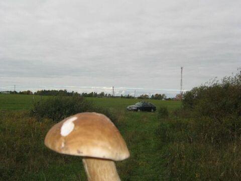 Экология национального парка Завидово - более 7 Га земли для фермеров! - Фото 2