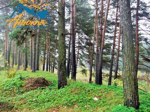 Дача в СНТ Урожай 4,3 сотки в Обнинске - Фото 2