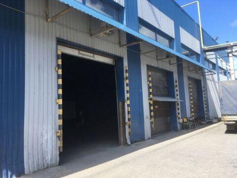 Сдам производственное помещение 2380 кв.м, м. Комендантский проспект - Фото 1