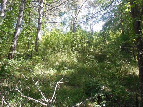 Продам недорого земельный участок в Ялте 5 соток.срочная продажа - Фото 4
