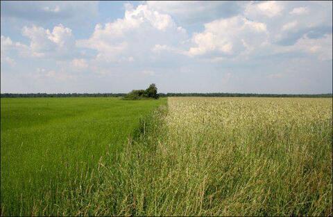 Земля сельхозназначения в Рязанской области