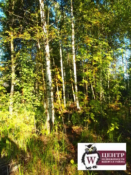 "Участок 6,57 сот. в СНТ ""Богатырь, "" п. Лейпясуо - Фото 3"