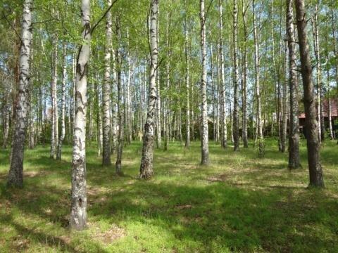 Эксклюзивный участок на реке Волга - Фото 1
