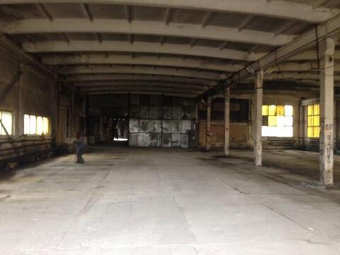 Сдам складское помещение 1240 кв.м, м. Звездная - Фото 1