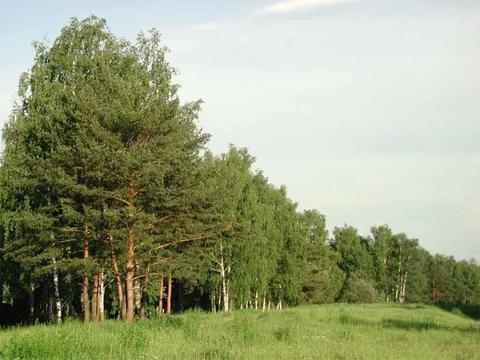Участок близ озера Нахимовское - Фото 3