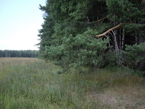 Большой участок 5.7 га. в район Звенигорода и Голицыно 45 км. от МКАД - Фото 5