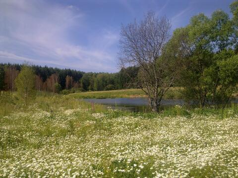 Продается земельный участок, с.Старогромово - Фото 3