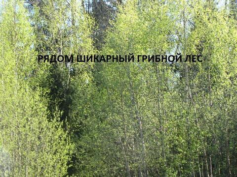 Петергоф + Стрельна , Заостровье - Фото 2