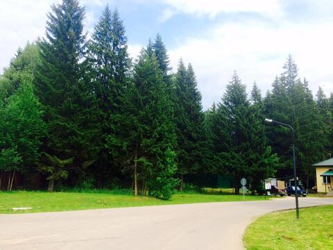 Лесной участок с соснами. 15 соток 6,5млн - Фото 1
