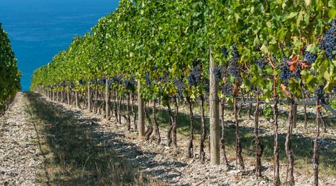Продам Вин завод +150 га виноградников - Фото 4