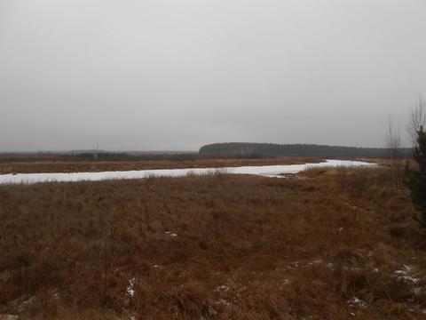 Земельный участок на берегу реки Пра среди соснового бора . - Фото 3