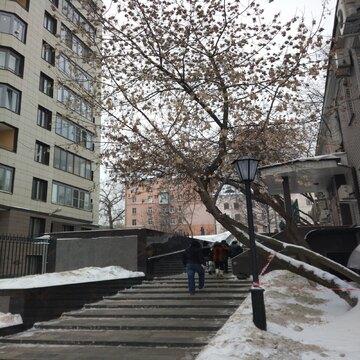 Квартира в центре у метро Цветной бульвар - Фото 4