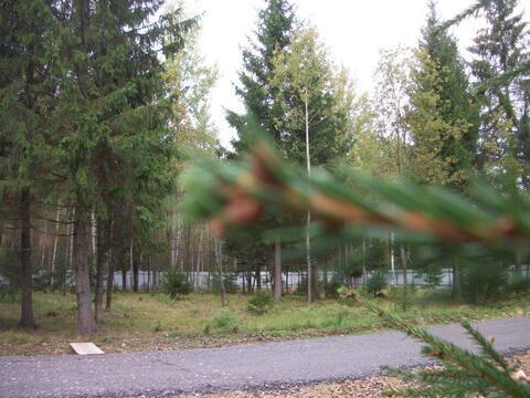 """Земельный участок СНТ """"Лесной воздух"""" - Фото 2"""