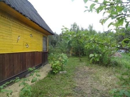 В обжитом, зеленом садоводстве массив Кобрино уютная дача на 6 сотках - Фото 4