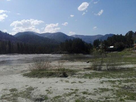 Продается участок на берегу Катуни - Фото 3
