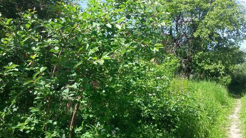 Продается земельный участок, дер.Нижнее Валуево - Фото 2