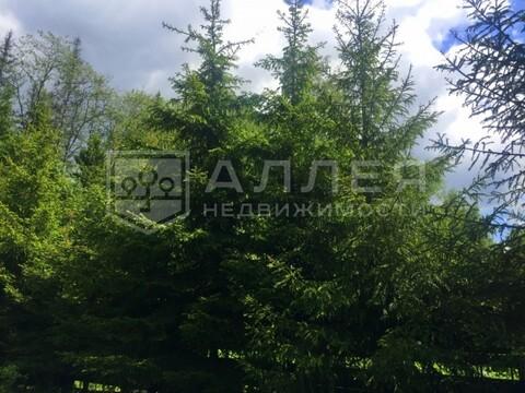 Лесной участок 30 сот. - Фото 1