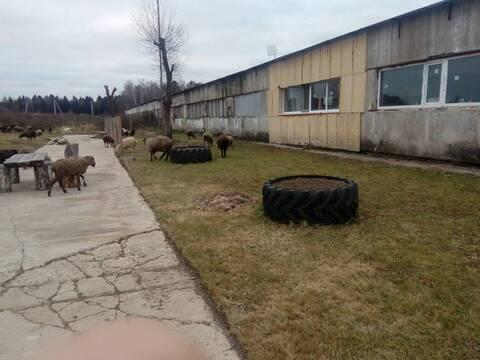 Сдам недорого ферму 72 км от МКАД Киевское шоссе д.Шилово Боровский - Фото 1