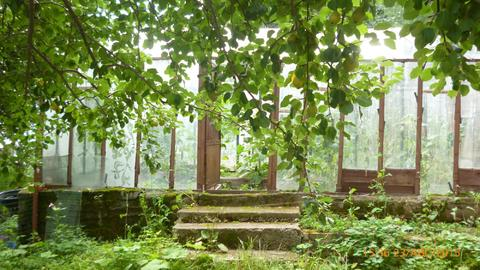 Сад Дачный - Фото 3