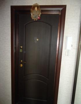 Аренда 1-к квартиры по ул. Южноуральская - Фото 3