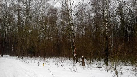 Каширское шоссе 48 км от МКАД в г.о.Домодедово в с.Вельяминово 8 соток - Фото 4