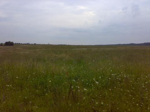 Продается участок 9 га в Калининградской области. - Фото 5