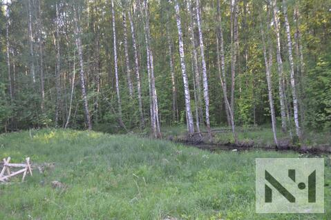 Продается лесной участок 20 сот. на границе Петербурга - Фото 2
