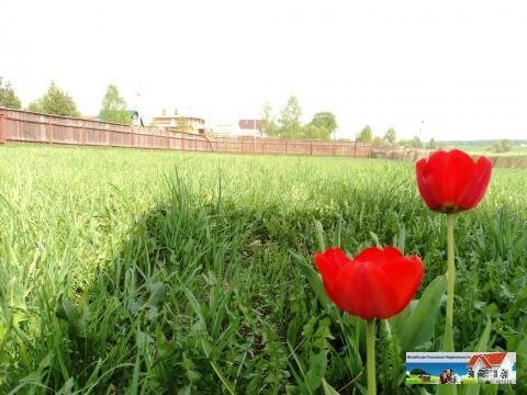 12 соток в деревне Прудня, Можайский район. - Фото 3