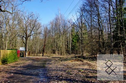 Дпк лесной одинцовский район