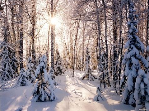 Участок 15 соток, с лесными деревьями в п. Ватутинки. Новая Москва. - Фото 1