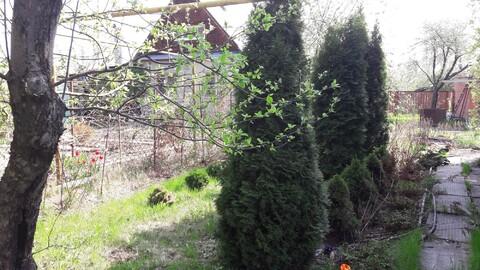 Продается дача в лесной зоне - Фото 2