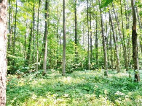 45 соток в лесу! Калужское шоссе, 70 км - Фото 2