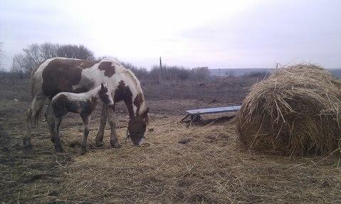 Продажа фермы в Корочанском р-не - Фото 3