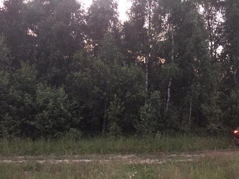 Участок 16 соток, ИЖС, д. Тюфанка Чеховский р-н. Леные деревья - Фото 2