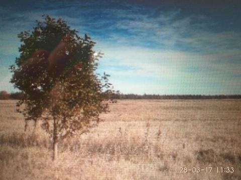 Продаются участки земли в Волосовском р-не, дир. Сельца, 150га - Фото 1