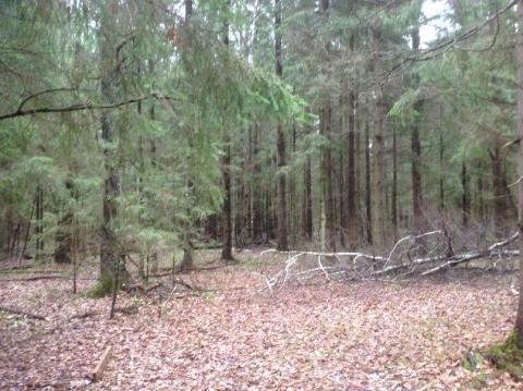Участок 12 сот. на опушке леса. Красиво, тихо, идеальный подъезд 40км - Фото 2