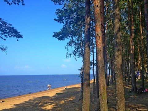 Участок 50 соток лпх с видом на залив. Кингисеппский рн, д. Валяницы - Фото 1