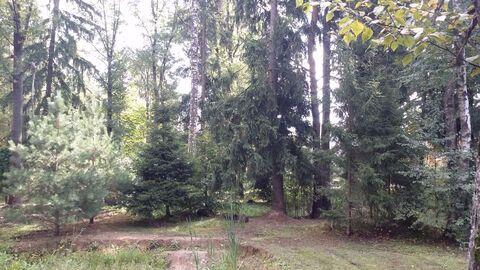 Киевское 11 км Москва Лесной участок Коммуникации Охрана - Фото 3