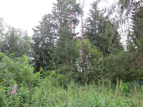 23 км Киевское шоссе, обжитой поселок, лесной участок, 26 сот - Фото 1