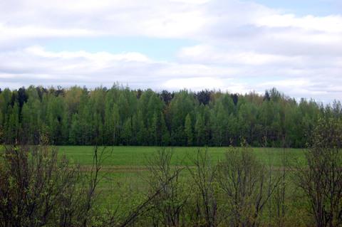 Продается 2,5 га земли на выезде из города по Мурманской трассе - Фото 3