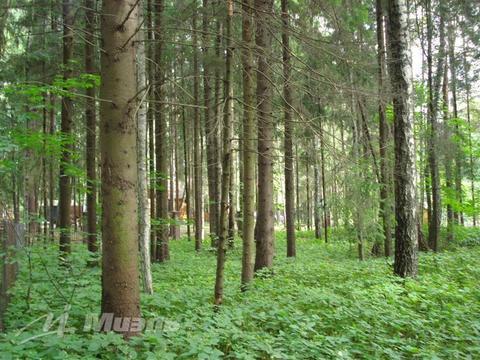 Продажа участка, Ватутинки, Десеновское с. п. - Фото 1