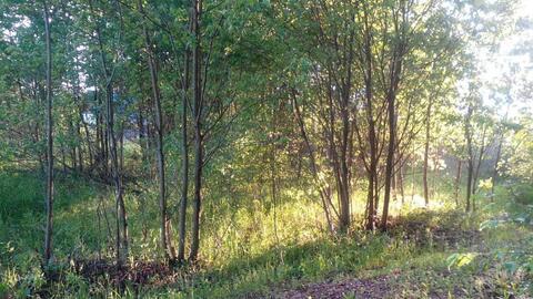 Продажа земельного участка в деревне Судимля - Фото 2