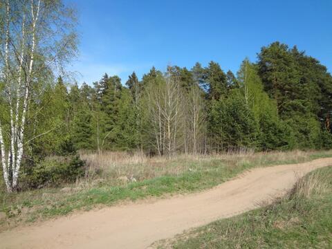 Участок рядом с сосновым бором - Фото 4