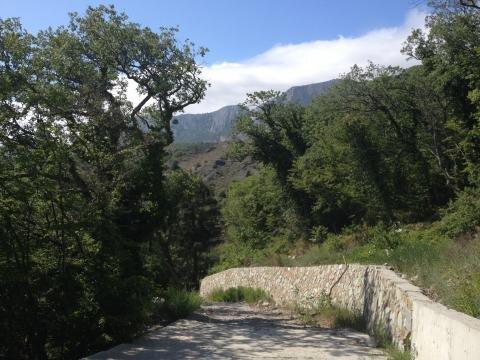 Участок в 100метрах от моря среди сосен ели и кипариса - Фото 4